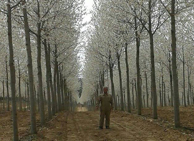 plantacion-clonal
