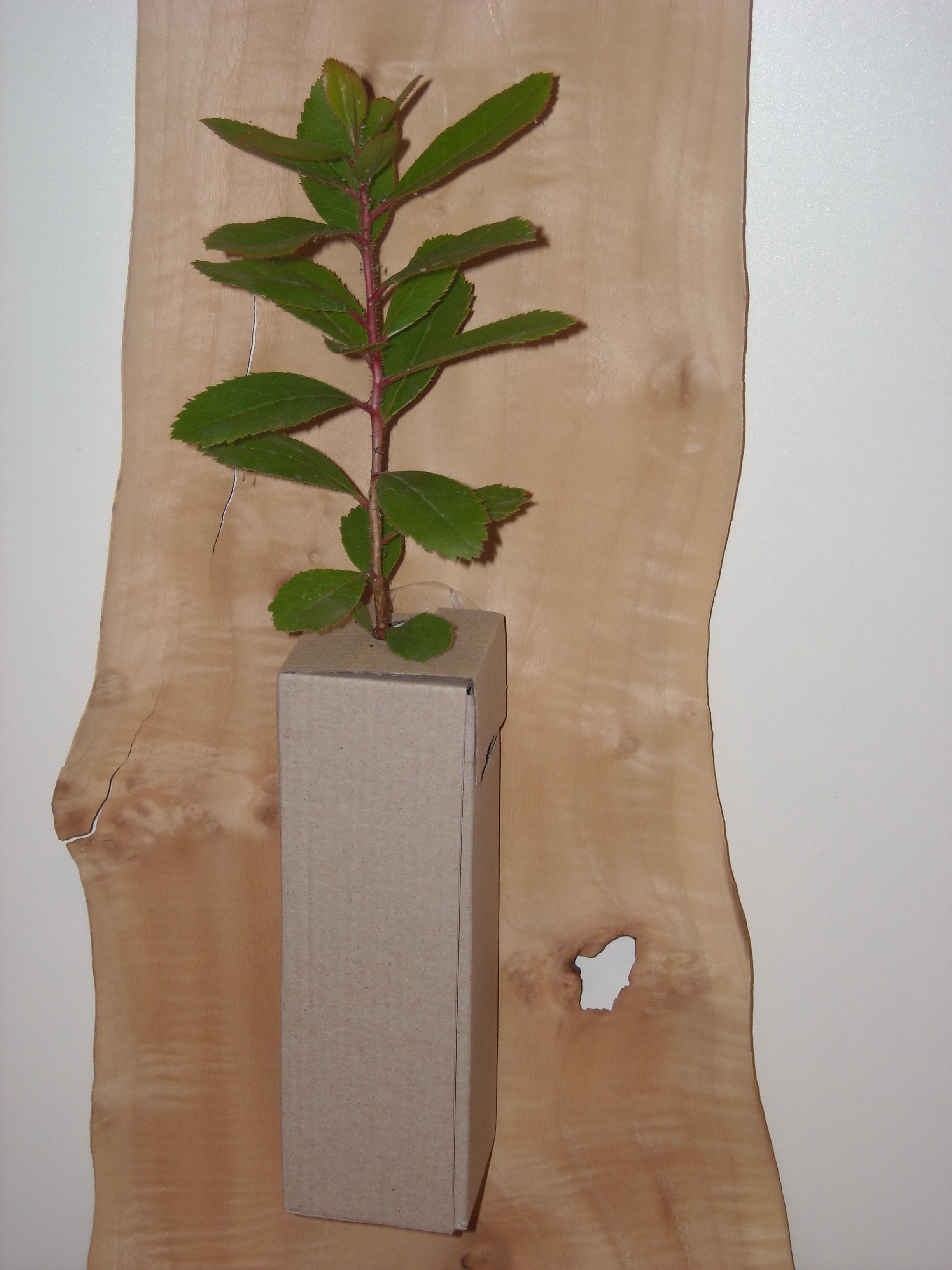 Arbol vestido caja anonima