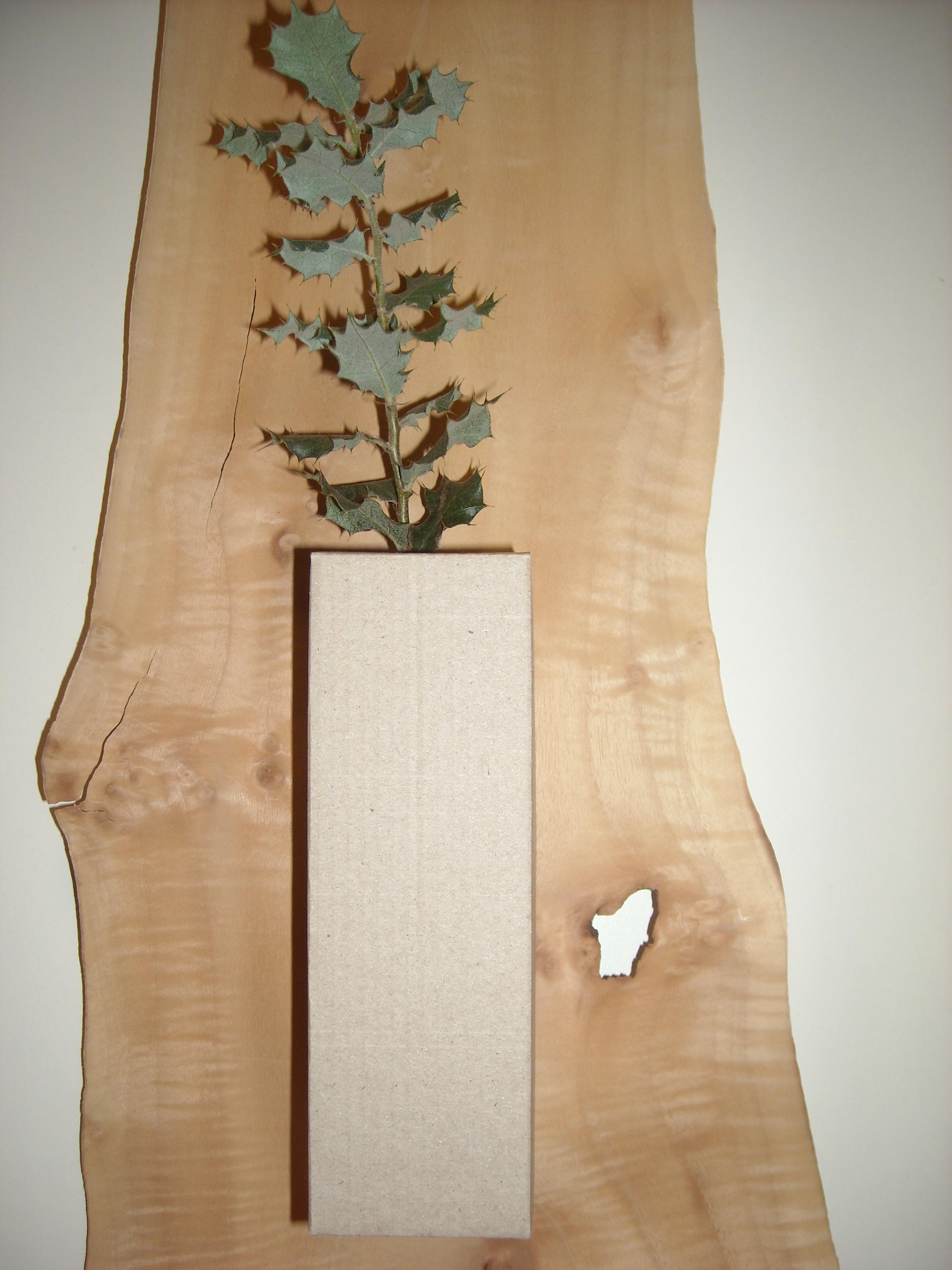 Encina_Quercus Ilex
