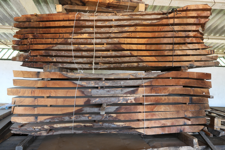 Bosques Naturales Bosques Naturales Y Venta De Madera Produccion - Troncos-de-arboles-decorativos