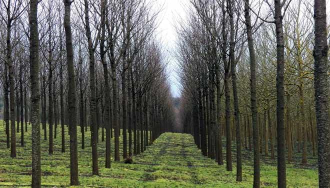 cerdeiras-apaisado-bosques-naturales